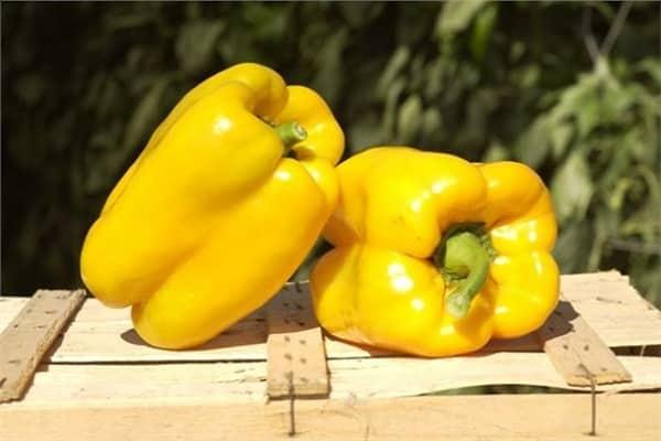 Перец желтый колокол - оригинальный сорт сладкого болгарского овоща