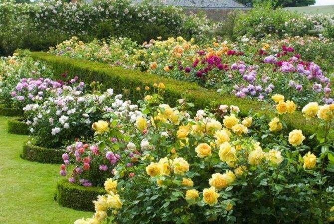 Розарий на даче своими руками - 145 фото примеров использования в саду и правила украшения участка