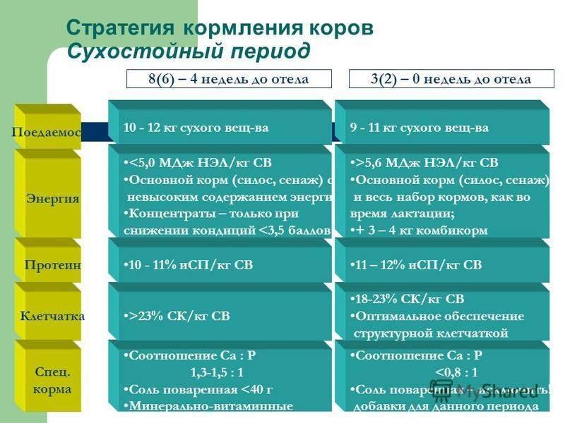 Сухостойных период у коров: что это — нормы кормления, содержание, рацион для стельных особей, продолжительность срока — moloko-chr.ru
