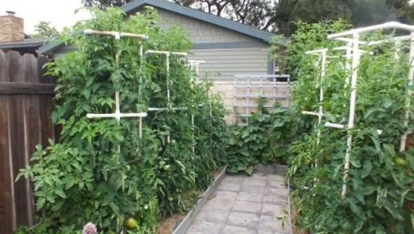 Подвязка помидор в открытом грунте - способы