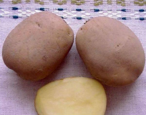 """Картофель волат - описание сорта, фото, отзывы, посадка и уход - журнал """"совхозик"""""""
