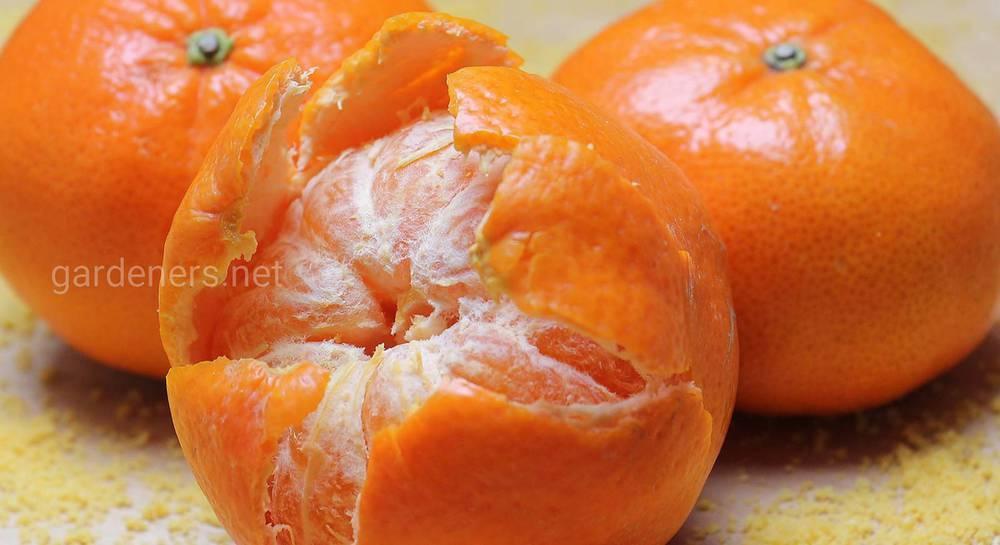 Кожура мандарина: польза, вред, применение   все очень просто