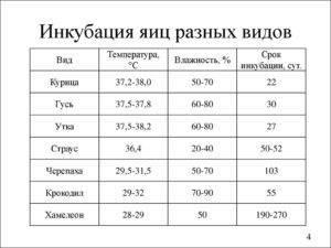 Таблица инкубации гусиных яиц в домашних условиях