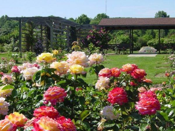 Создание розария в саду своими руками. выбор места на даче и сорта роз, подготовка участка. фото дизайна, видео