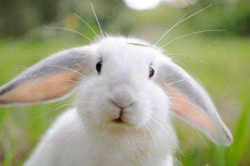 Бизнес на кроликах