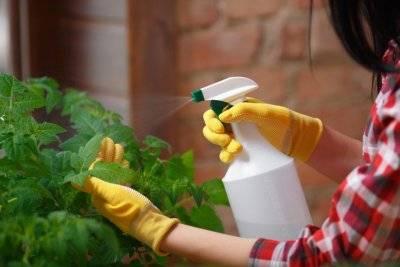 Применение перекиси водорода для помидоров. как сделать полив и опрыскивание максимально эффективными?