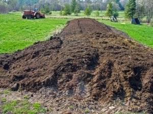 Коровяк на дачном участке: инструкция и нормы внесения