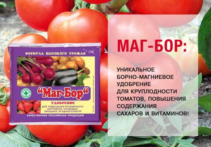 Чем подкармливать помидоры в открытом грунте для хорошего урожая