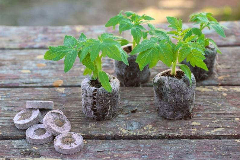 Рассада сладкого перца: как и когда сажать семена в домашних условиях