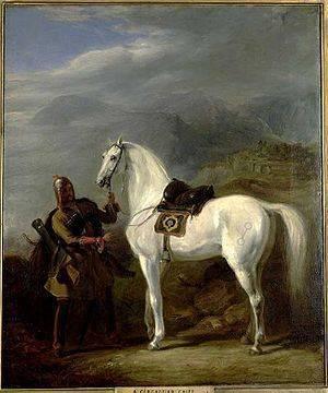 Кабардинская порода лошадей: фото, описание