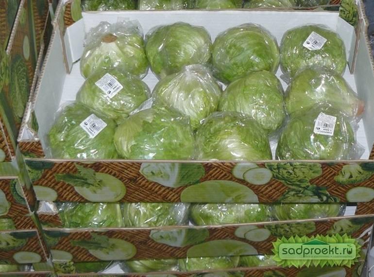 Как хранить капусту в холодильнике разрезанную частями: в пакете или без, чтобы она не гнила, не портились и не чернела