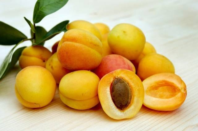 Сорт абрикоса царский, описание, характеристика и отзывы