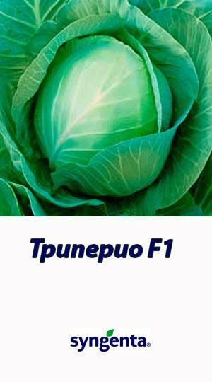 Характеристика капусты сорта белоснежка - агрономы
