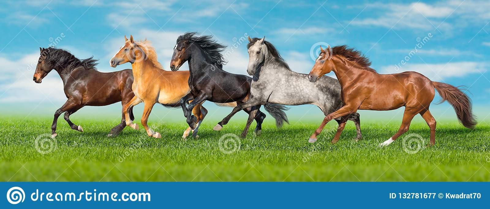 Как правильно ездить галопом на лошади