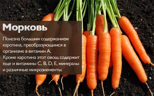 Почему морковь желтая: состав, фото, польза и вред