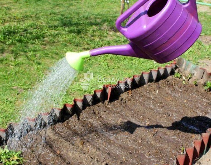 Применение нашатырного спирта в огороде для помидоров: как использовать аммиак для увеличения урожая томатов?