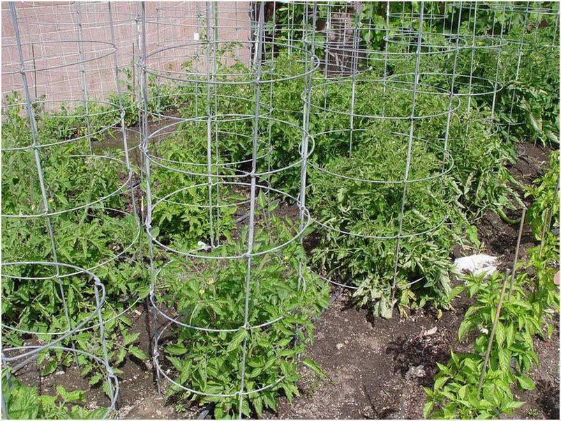 Как подвязывать помидоры, посаженные в открытый грунт: способы и советы