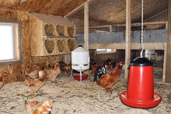 Болезни кур несушек зимой и их лечение: советы, фото- и видеообзор