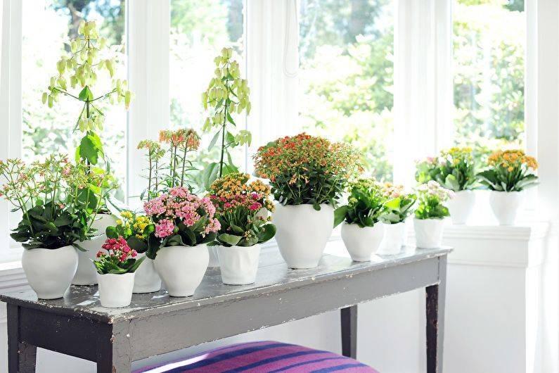 Как ухаживать за цветком каланхоэ в домашних условиях чтобы цвел, виды