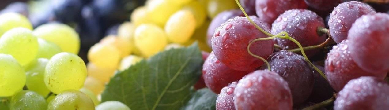 Чем полезен и вреден виноград, калорийность, применение при похудении