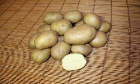 Картофель голубизна: характеристика и описание сорта, выращивание и уход