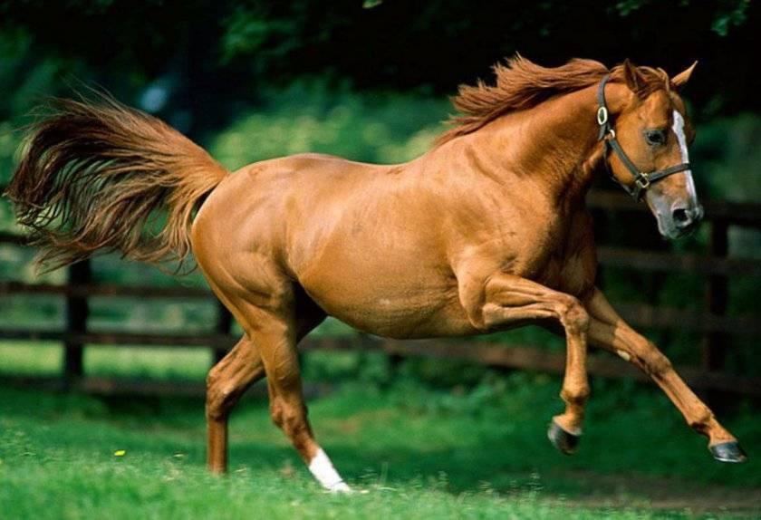 Сколько в среднем живут лошади – продолжительность жизни