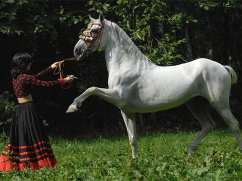 Разновидности бега лошади