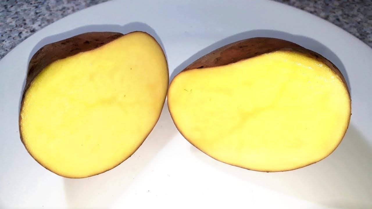 Картофель: польза и вред для здоровья человека, калорийность