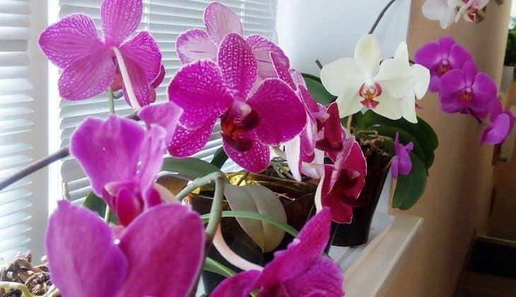 Важные факты о цветоносе орхидеи и уходе за растением в период роста стрелки