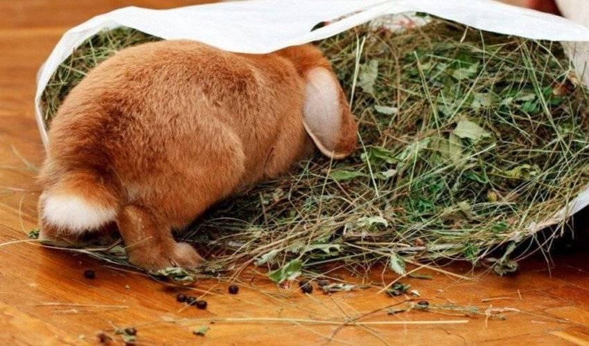 Можно ли кормить кроликов капустой, какую именно разрешено давать