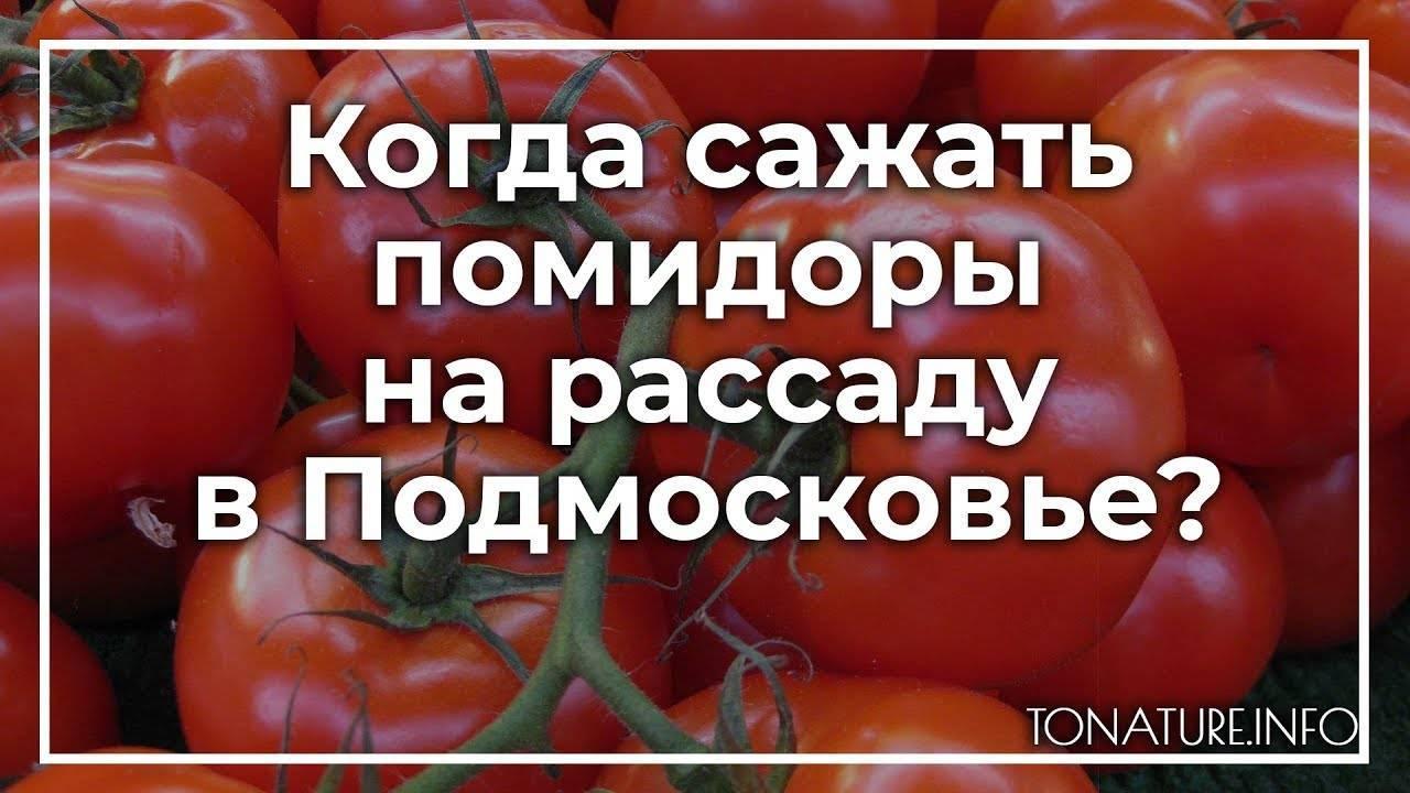 Сроки посадки томатов на рассаду в ленинградской области, подмосковье, сибири и других частях россии: когда нужно сеять помидоры для теплицы и открытого грунта? русский фермер