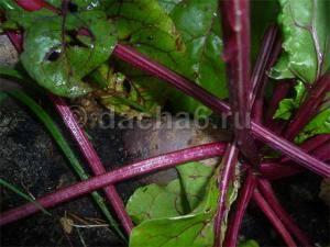 Чем подкормить морковь после всходов в открытом грунте для хорошего урожая