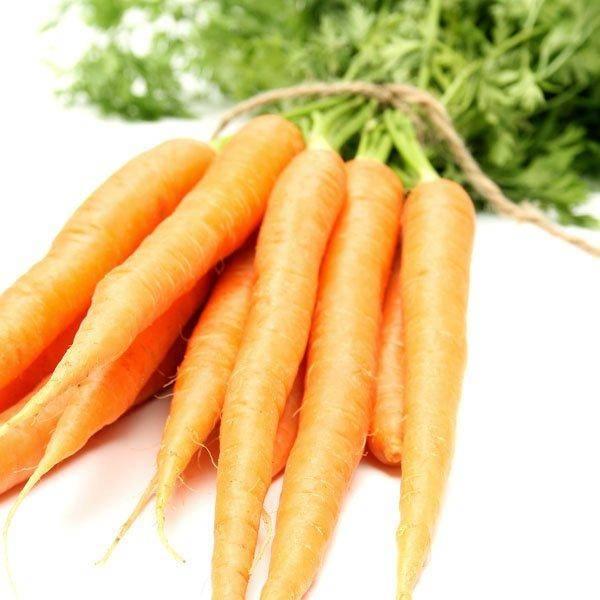 Морковь и лук на одной грядке: схема посадки и можно ли их вообще сажать рядом, а также когда лучше всего это делать и как ухаживать за растениями? русский фермер