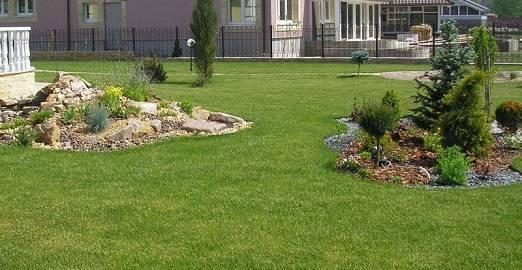 Подходим к делу грамотно: правила посадки газонной травы и советы по уходу