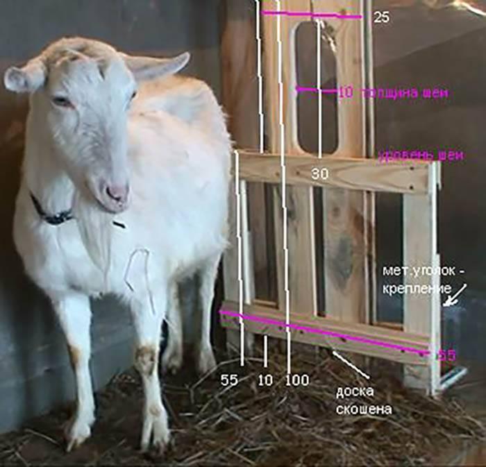 Станок для доения коз: как сделать своими руками