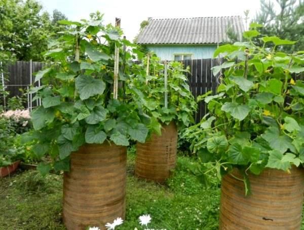 Тёплая грядка для огурцов: заготовка компоста осенью или весной, выбор места для грядки