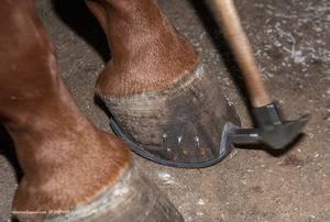 Зачем нужно подковывать коней, как подковывание облегчит жизнь лошади, не больно ли животному в процессе ковки