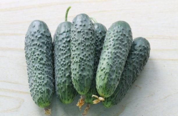 Все секреты выращивания огурца сорта изящный