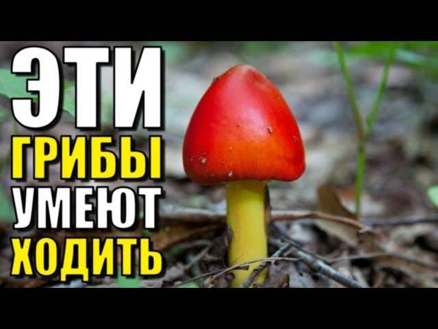 Хищные грибы: кого они едят?