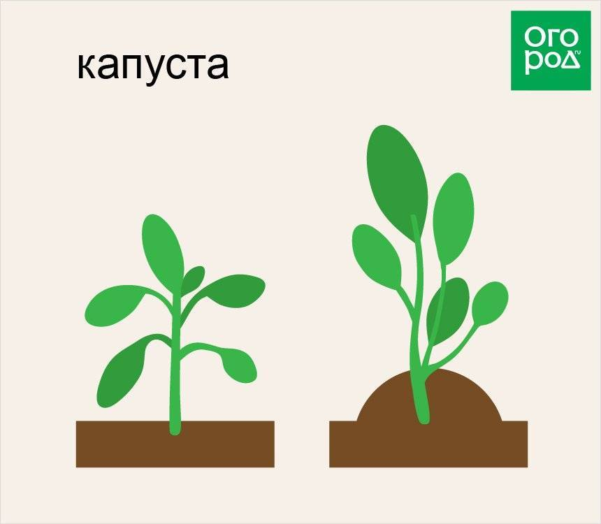 Как выращивать томаты: подробная инструкция
