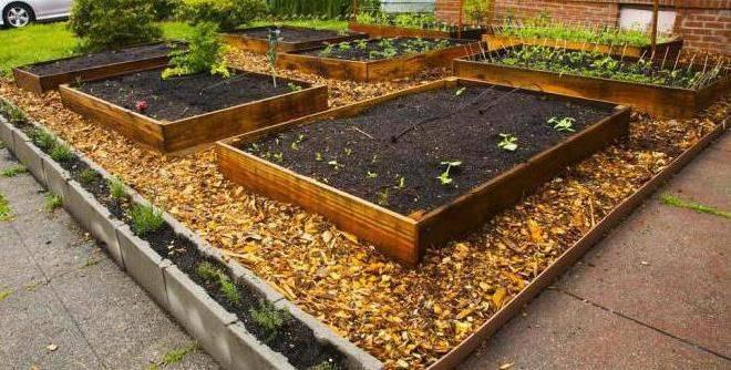 Как использовать опилки в саду и огороде весной летом