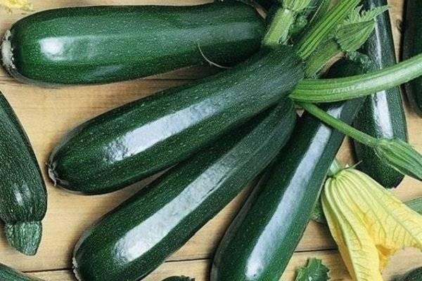 Что это цукини: любимый овощ диетологов или господин нашего сердца