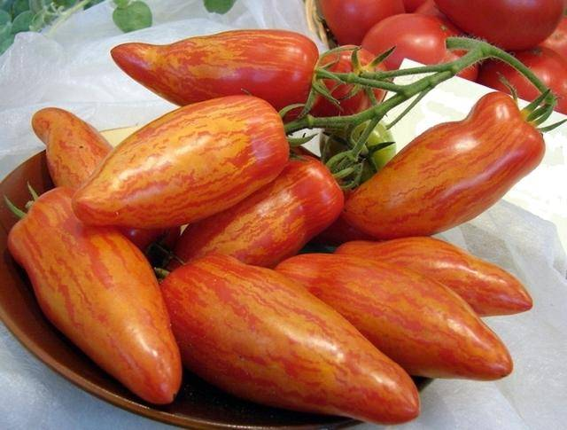Томат перцевидный: характеристики сорта, описание, отзывы, урожайность