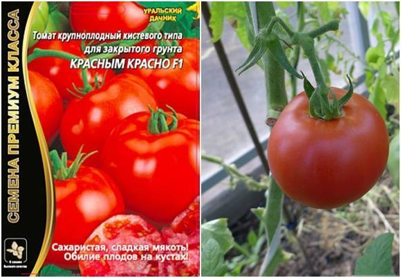 Помидоры красным красно f1: отзывы, описание сорта, особенности выращивания