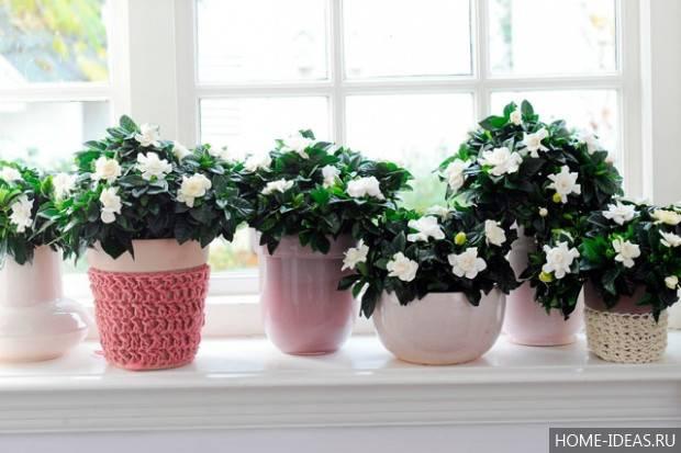 Как выбрать цветы для офиса: правила выбора и список неприхотливых растений с фото и названиями