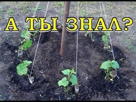 Выращивание огурцов на малых участках - оригинальные способы
