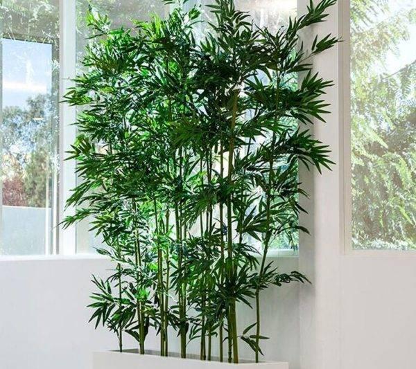 Как вырастить бамбук в открытом грунте и дома? полезные советы - sadovnikam.ru