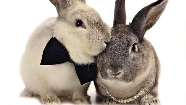 Факты о кроликах. кролики — интересные факты | интересные факты