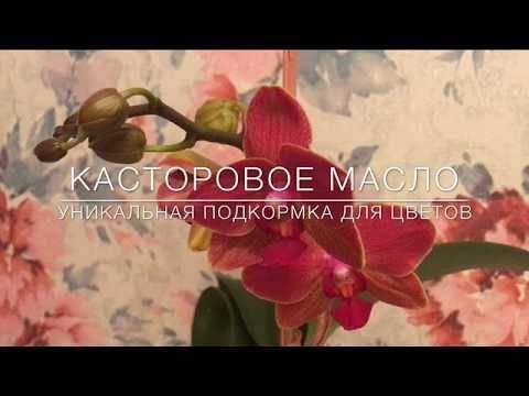 Касторовое масло для цветов как удобрение: как использовать, отзывы и советы