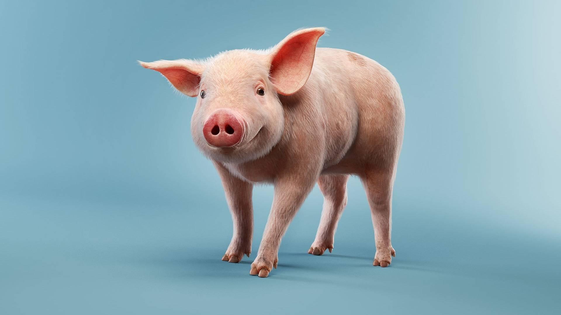 К чему снится свинья, сонник – свинья во сне